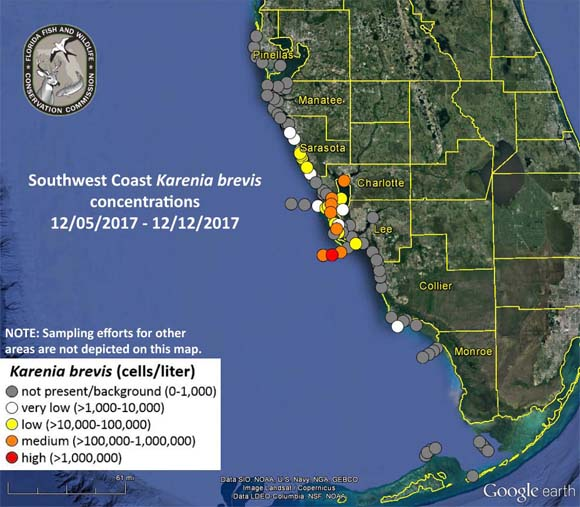 Red tide detected in Southwest Florida