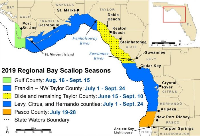Recreational bay scallop season for certain counties begins today