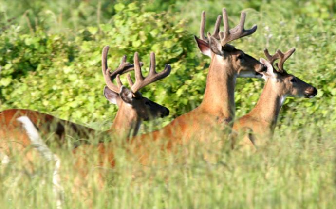 New deer hunting laws and reporting requirements
