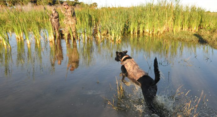 Changes in duck hunting laws