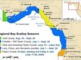 scallop season, citrus gazette