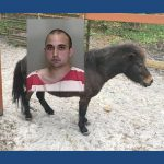 Florida man arrested for mounting horse