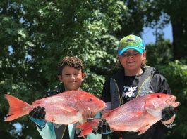 citrus gazette, red snapper, gulf fishing, crystal river news