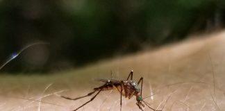 citrus gazette, mosquitos