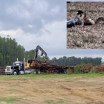 Southern fox squirrel habitats destroyed during breeding season in Crystal River, residents furious